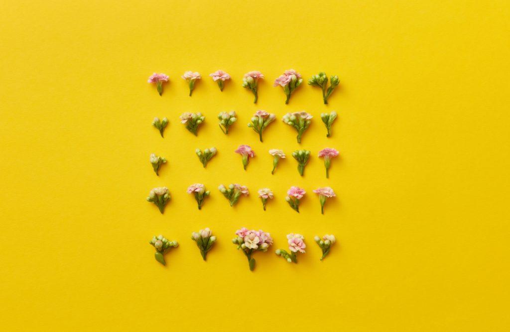 Blüten auf gelbem Hintergrund.