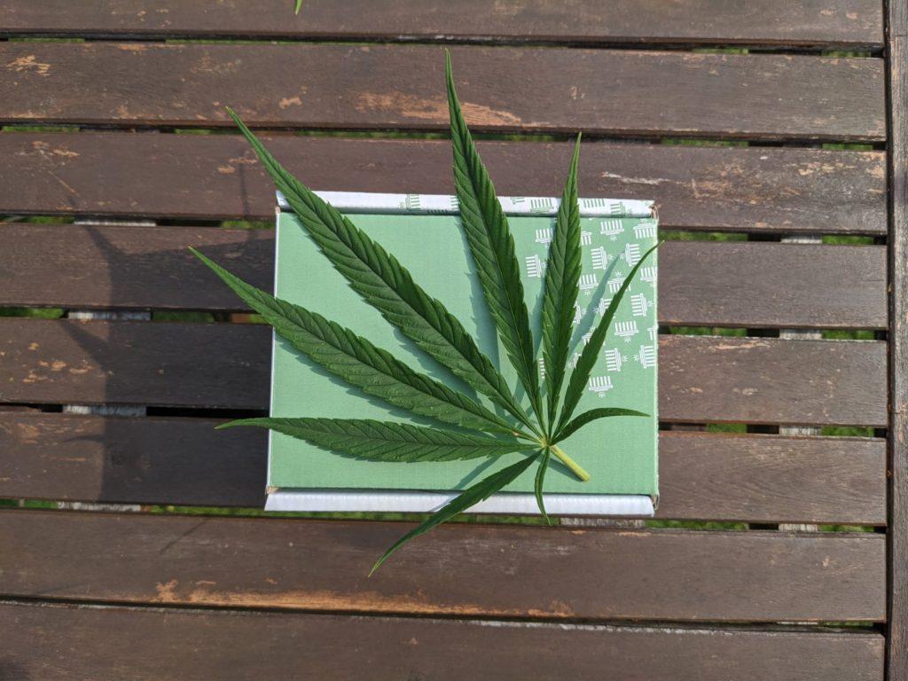 Hanfblatt auf grünem Karton auf Holztisch.
